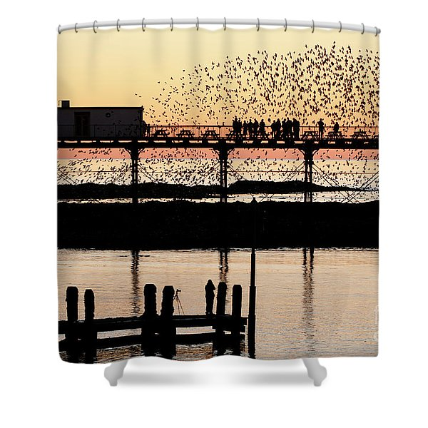 Golden Hour Starlings In Aberystwyth Shower Curtain