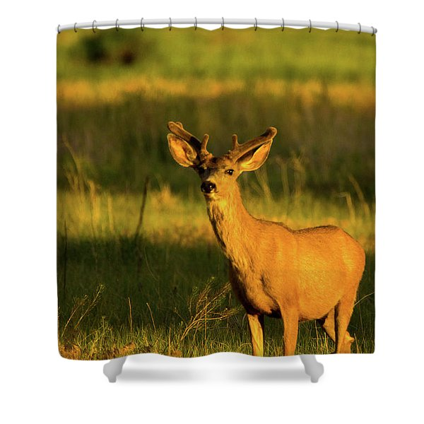 Golden Light Buck II Shower Curtain