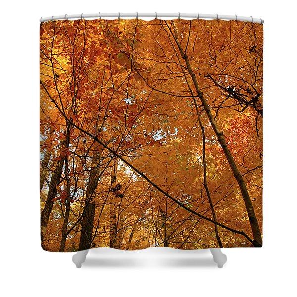 Golden October Forest Shower Curtain