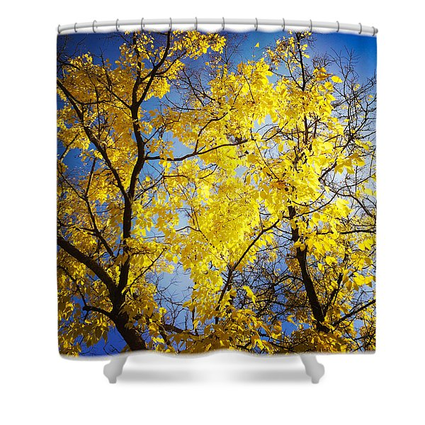 Golden October Tree In Fall Shower Curtain