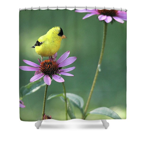 Goldfinch On A Coneflower Shower Curtain