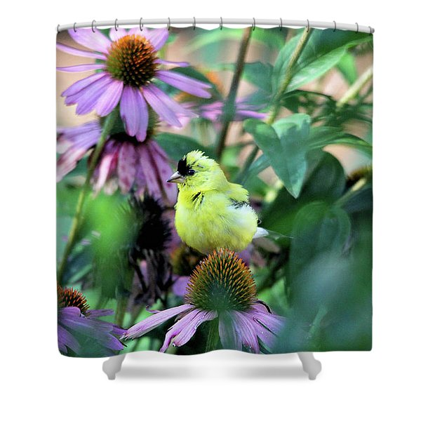 Goldfinch On Coneflowers Shower Curtain