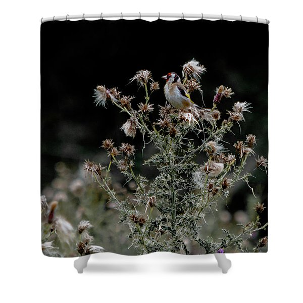 Shower Curtain featuring the photograph Goldfinch Sitting On A Thistle by Scott Lyons