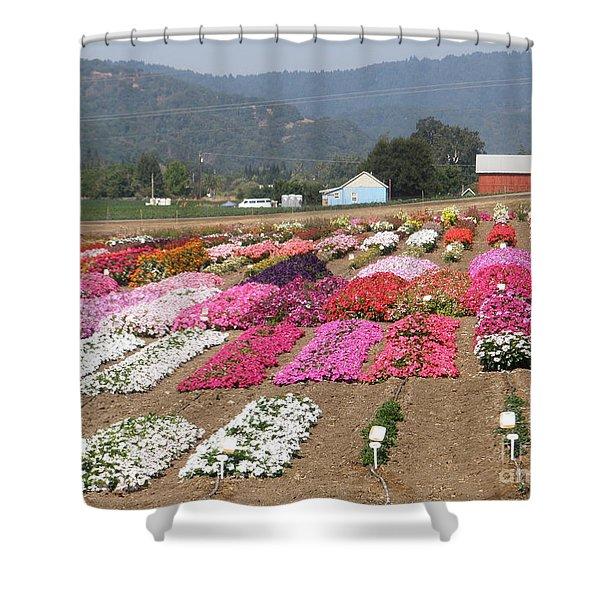 Goldsmith Seed Company Shower Curtain