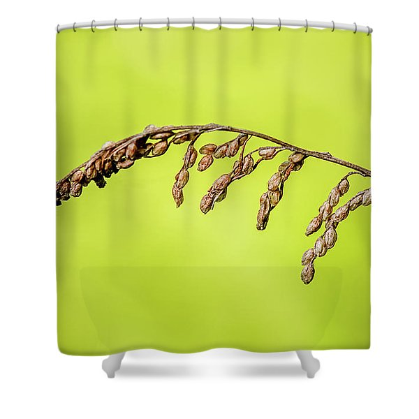 Gone To Seed Shower Curtain