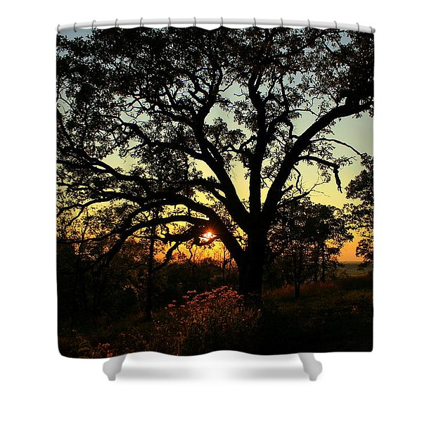 Good Night Tree Shower Curtain