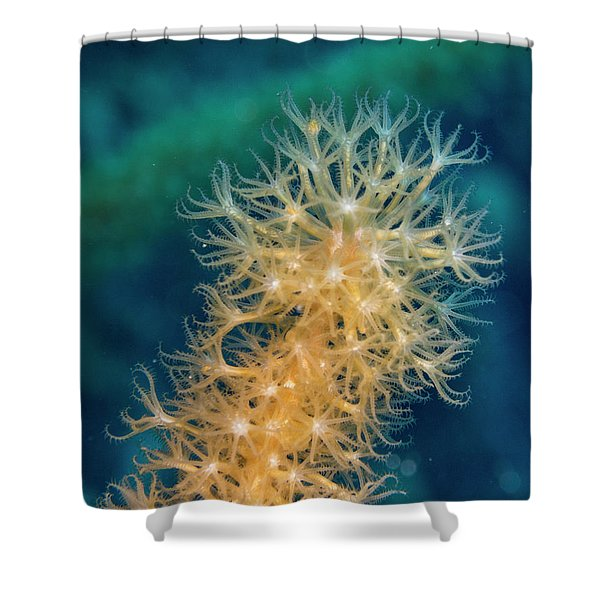 Gorgonian Detail Shower Curtain