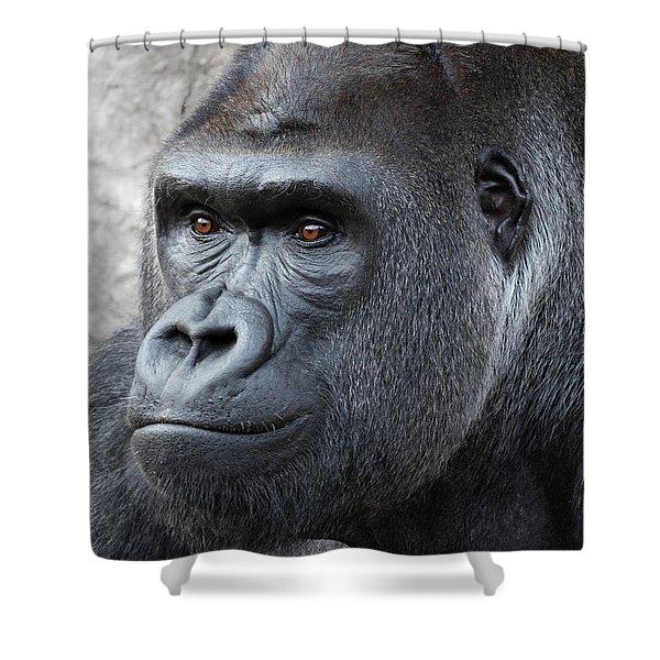 Gorillas In The Mist Shower Curtain