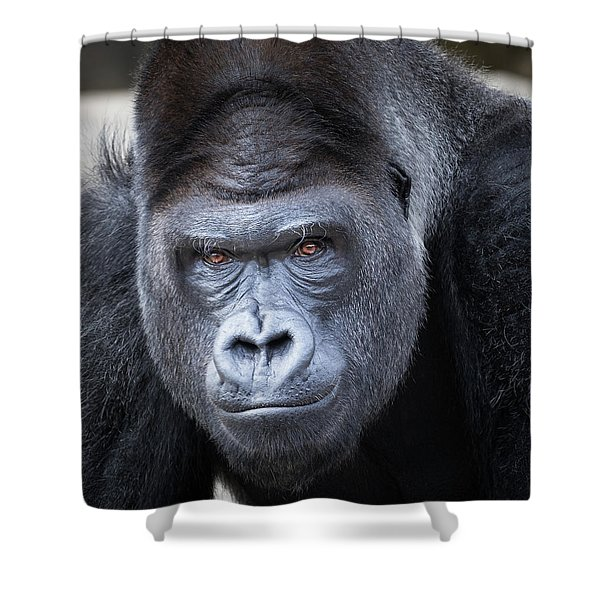 Gorrilla  Shower Curtain