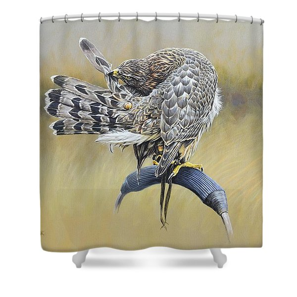 Shower Curtain featuring the painting Goshawk Preening by Alan M Hunt