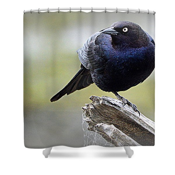 Grackle Resting Shower Curtain