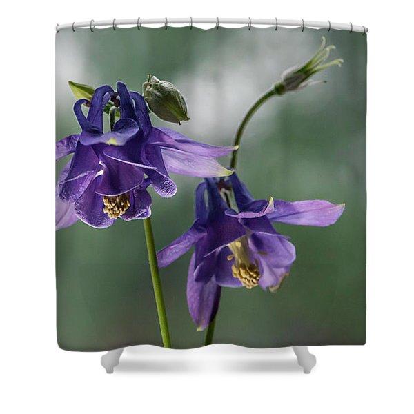 Granny's Purple Bonnet  Shower Curtain