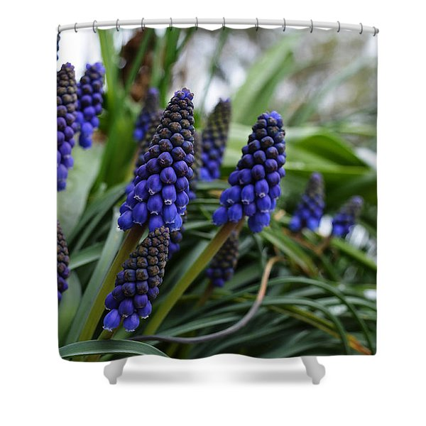 Grape Hyacinths Shower Curtain