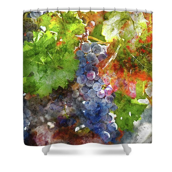 Grapes On The Vine In The Autumn Season Shower Curtain