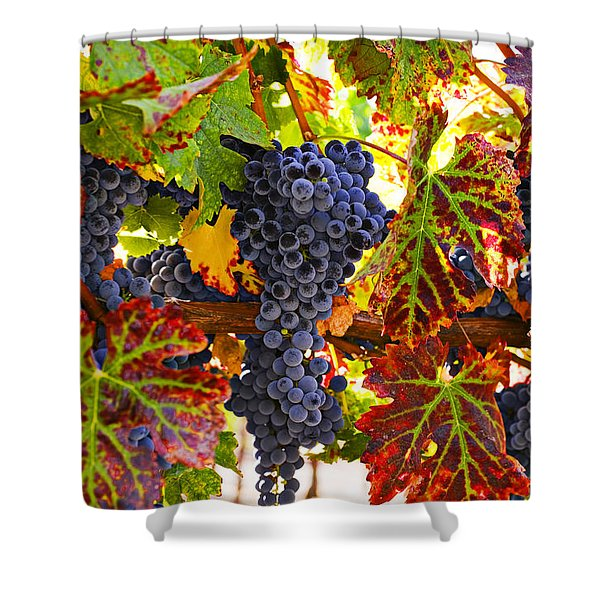 Grapes On Vine In Vineyards Shower Curtain