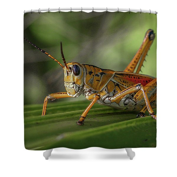 Shower Curtain featuring the photograph Grasshopper And Palm Frond by Tom Claud