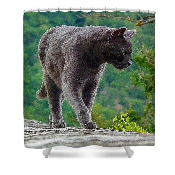 Gray Cat Stalking Shower Curtain