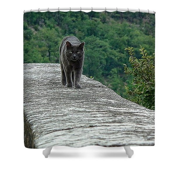 Gray Cat Prowling Shower Curtain