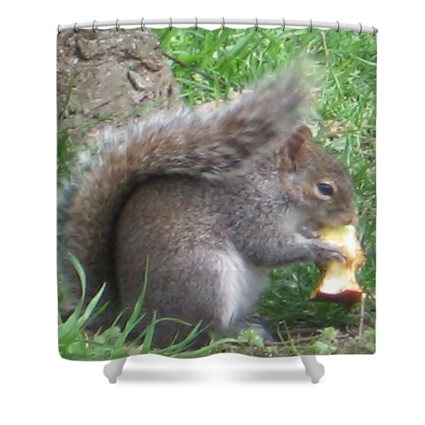 Gray Squirrel With An Apple Core Shower Curtain