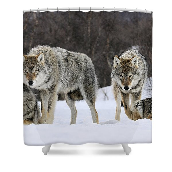 Gray Wolves Norway Shower Curtain