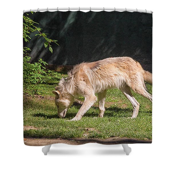 Gray Wolfe  Shower Curtain