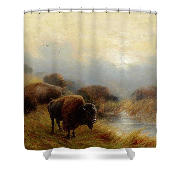 Grazing Buffalo Shower Curtain