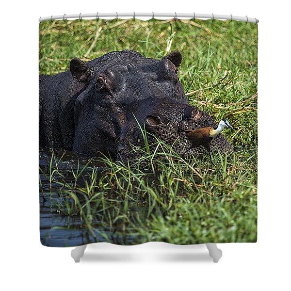 The Hippo And The Jacana Bird Shower Curtain