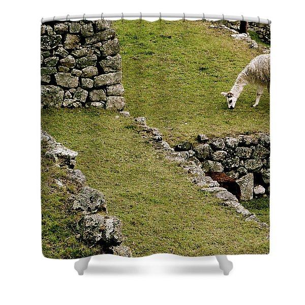 Grazing In Machu Picchu Shower Curtain