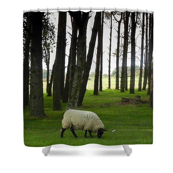 Grazing In The Woods Shower Curtain