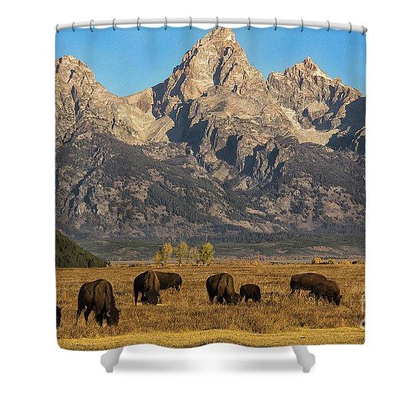 Grazing Under The Tetons Wildlife Art By Kaylyn Franks Shower Curtain