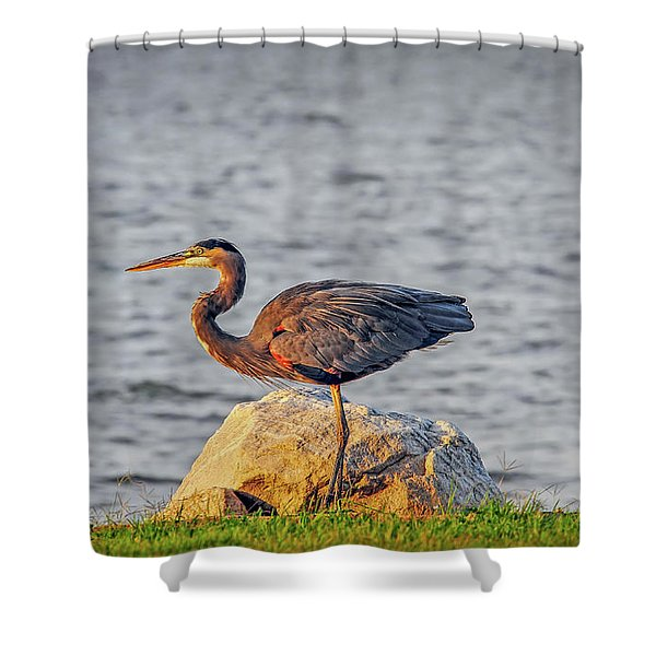 Great Blue Heron At Sunset Shower Curtain
