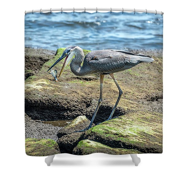 Great Blue Heron Catching A Blue Crab On Chesapeake Bay Shower Curtain
