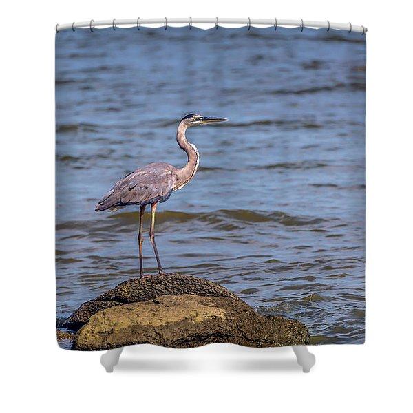 Great Blue Heron Gaze Shower Curtain