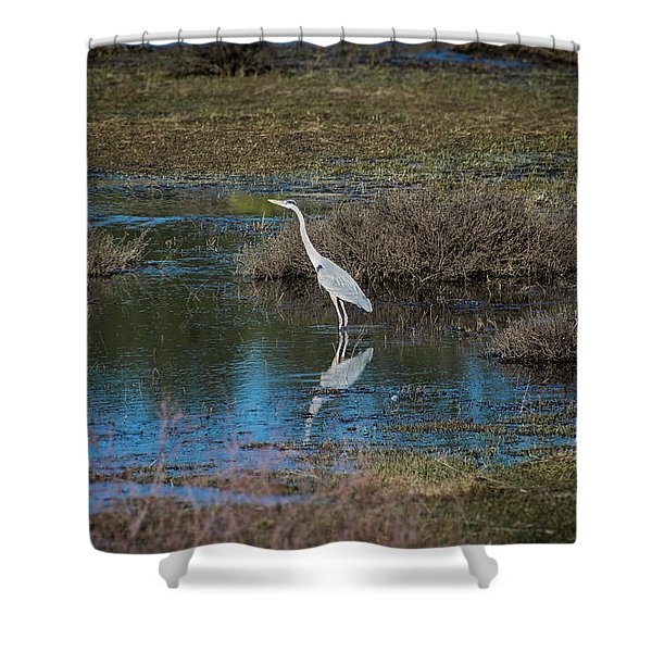 Shower Curtain featuring the photograph Great Blue Heron by Jason Coward
