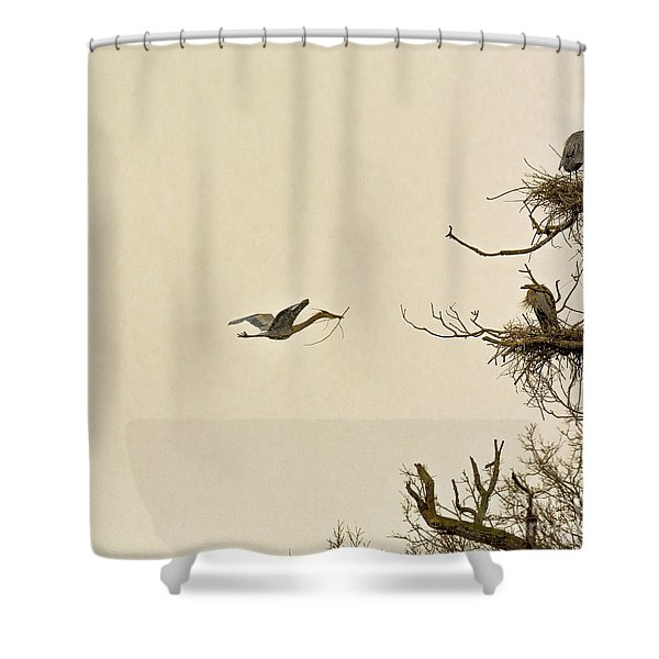 Great Blue Heron Nest Building Shower Curtain