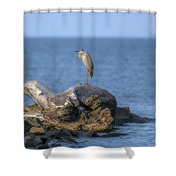 Great Blue Heron On Chesapeake Bay Shower Curtain