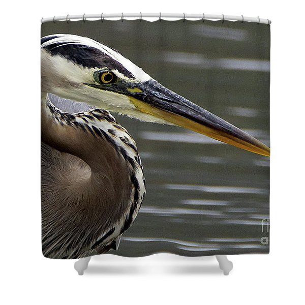Great Blue Heron Portrait 2 Shower Curtain