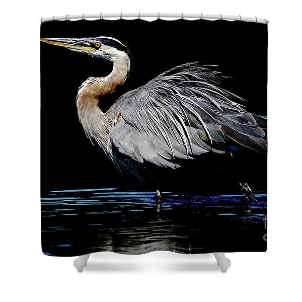 Great Blue Heron Show Off Shower Curtain