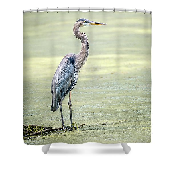 Great Blue Heron Standing In A Marsh Shower Curtain