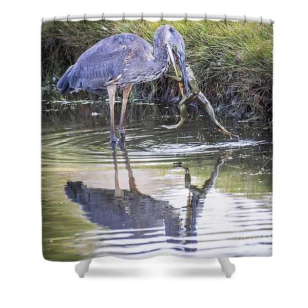 Great Blue Heron Vs Huge Frog Shower Curtain