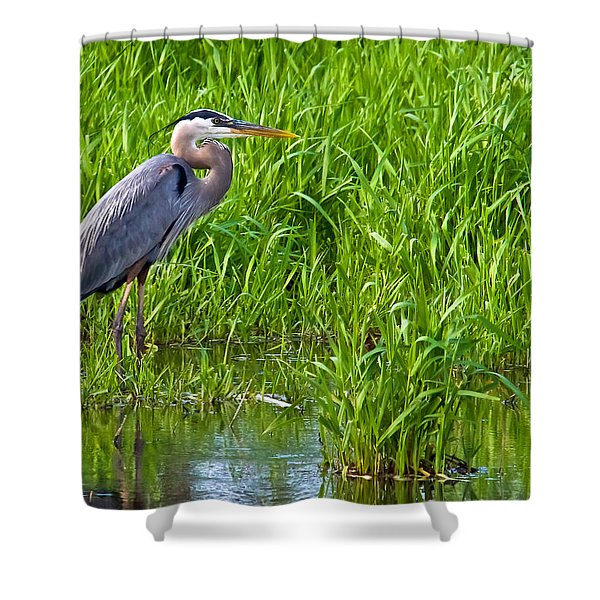 Great Blue Heron Waiting Shower Curtain