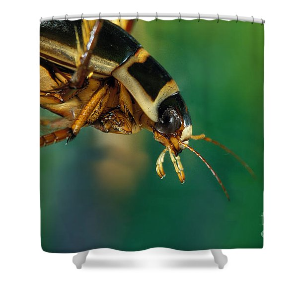 Great Diving Beetle Shower Curtain