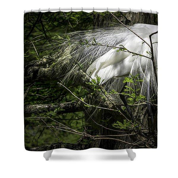 Great Egret #2 Shower Curtain