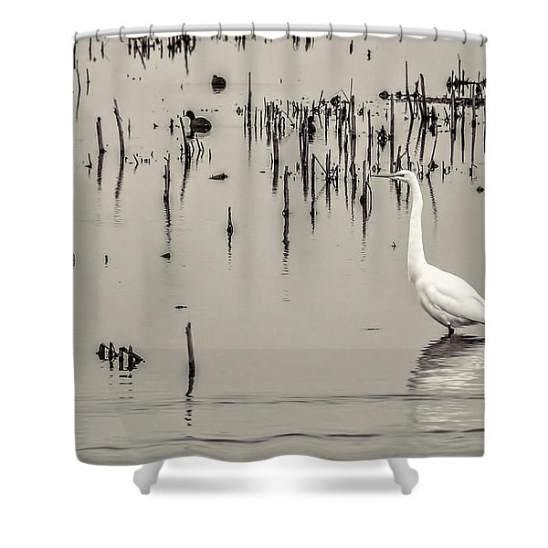 Great Egret At Horicon - B - W  Shower Curtain