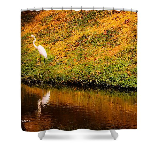 Great Egret At The Lake Shower Curtain