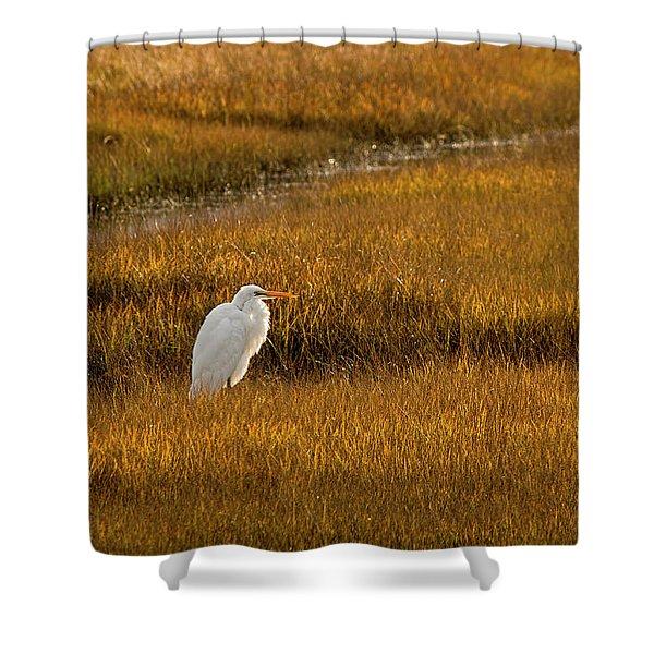 Great Egret In Morning Light Shower Curtain