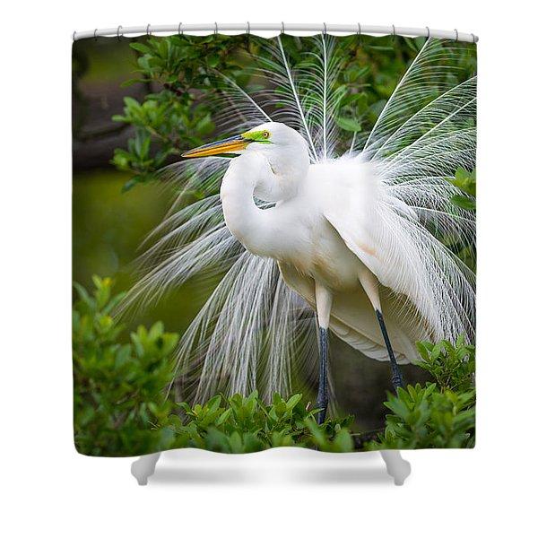 Great Egret Nesting St. Augustine Florida Coastal Bird Nature Shower Curtain
