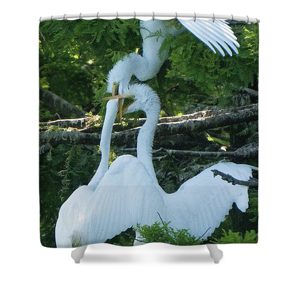 Great Egrets Horsing Around Shower Curtain