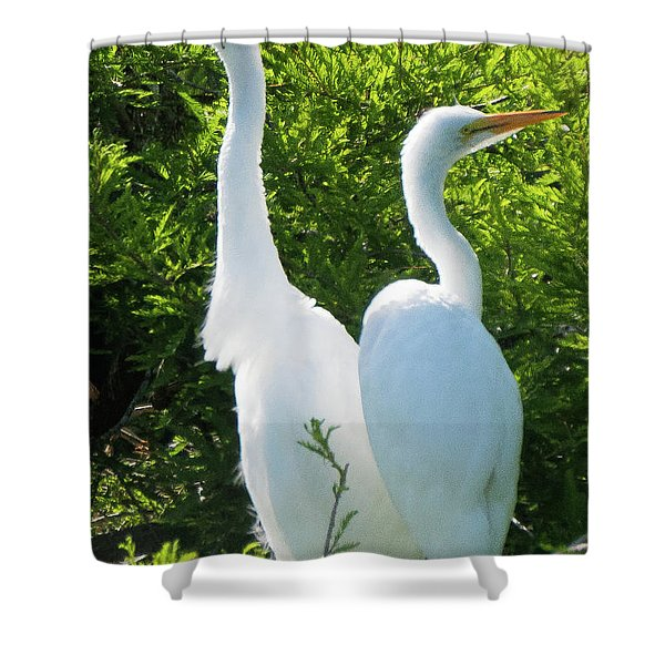 Great Egrets Standing Watch Shower Curtain