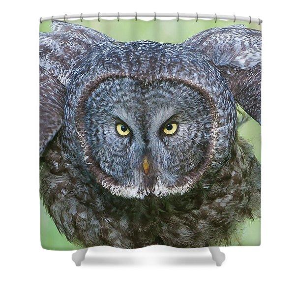 Great Gray Owl Flight Portrait Shower Curtain
